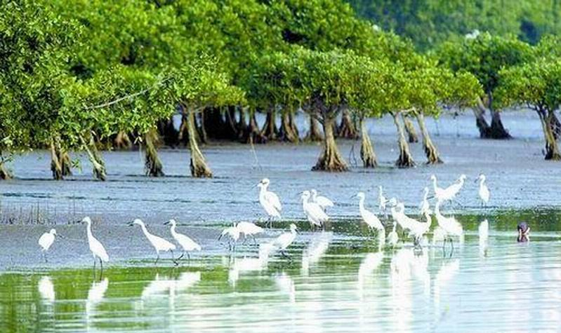 Tropical mangrove forest