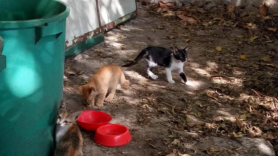 Three cats in the yard