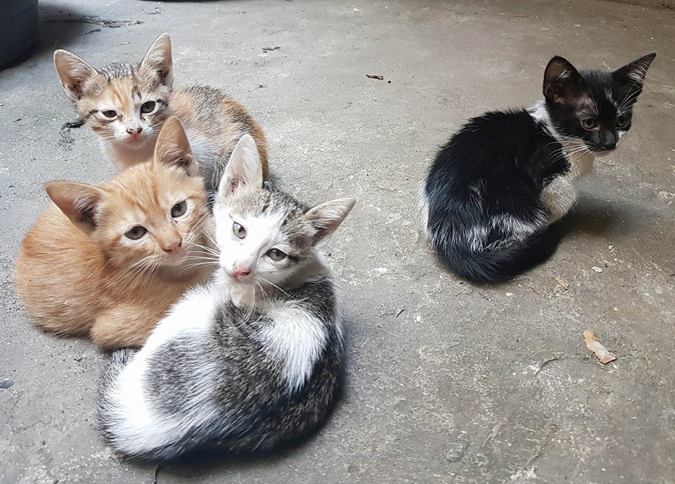 Four cats in the yard